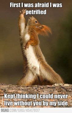 1000 images about funny squirrels on pinterest funny