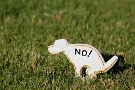 my backyard smells like dog poop survey homeowners pissed off about neighbors dog poop on