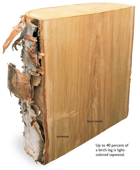 you woodworking the way wood works birch popular woodworking magazine