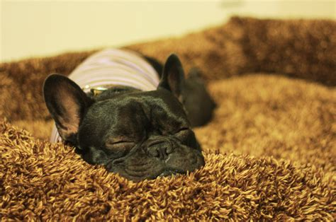 do dogs snore does your snore how to stop your from snoring