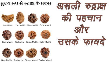 rudraksha meaning and mukhi types rudraksh क स र द र क ष क क य ह फ यद और क स पहच न
