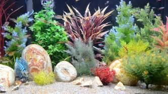 Aquarium Screensaver Fishtank 1080p HD    TROPICAL   Aquarium
