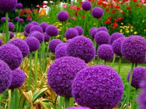 imagenes de flores hermosas y raras las flores mas raras y hermosas im 225 genes taringa