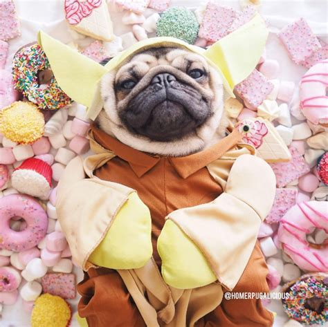 why do pugs bark so much pugs donuts pug jokes
