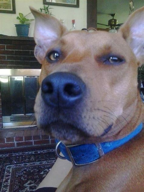 puppy that looks real uberfacts on quot there s a that really looks like scooby doo in real