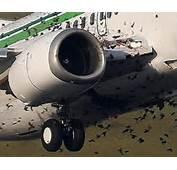 Hawaiian Airlines 767 Suffers Bird Strike On Approach To Sacramento