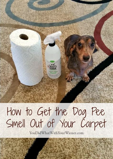 11 year old dog peeing in house how to get the smell of dog pee out of your carpet