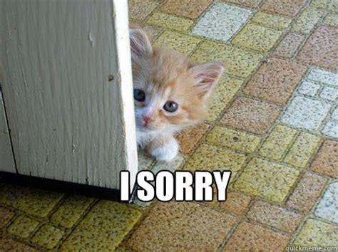 Sorry Meme - sorry cat memes quickmeme