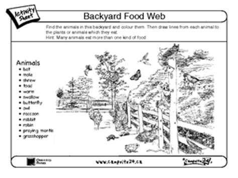 Backyard Food Chain by Backyard Food Web 3rd 6th Grade Worksheet Lesson Planet
