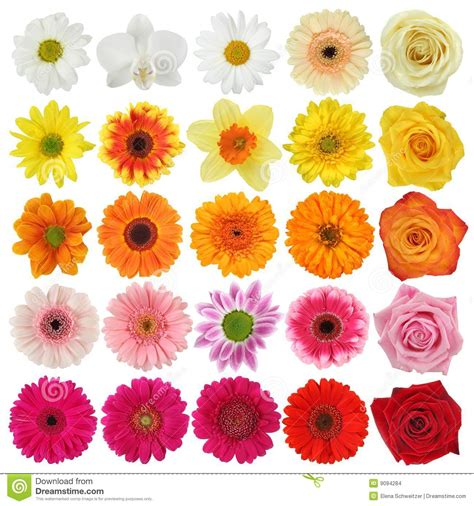 Flower Collection flower collection stock images image 9094284
