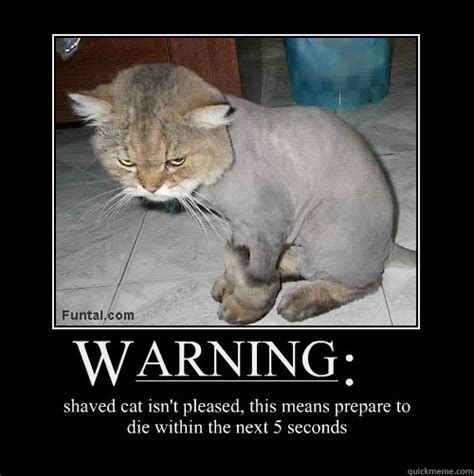 Shaved Cat Meme - angry shaved cat memes