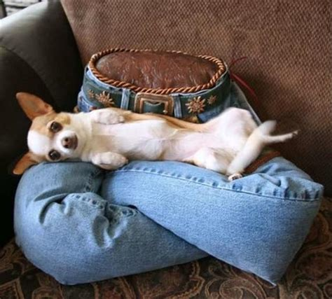 funny dog beds funny dog beds dump a day