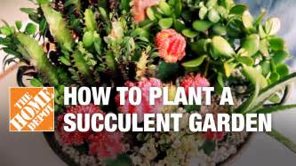 how to make a succulent container garden how to plant a succulent container garden