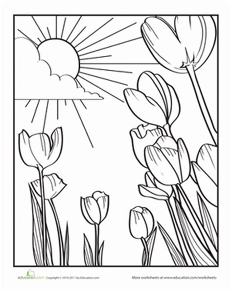 preschool nature coloring pages tulip worksheet education com