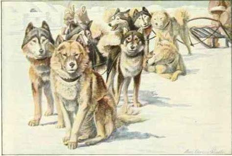 alaskan eskimo puppy alaskan eskimo dogs