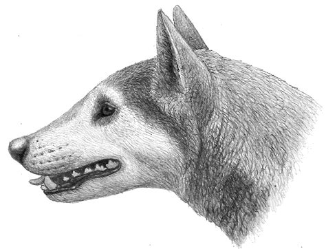origin of dogs fossil represents a new species paleontology grad student finds