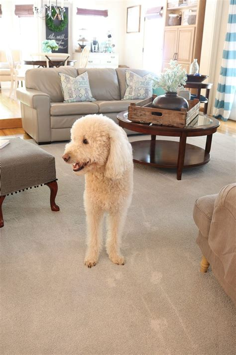 are dogs allowed at home depot home depot friendly home design 2017