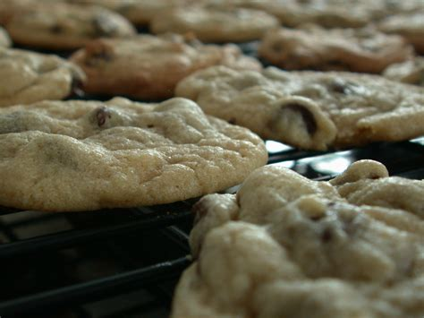 fresh cookies file chocolate chip cookies fresh out of the oven april