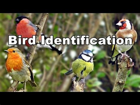 backyard bird identifier 15 4 mb free common backyard birds mp3 home pages player