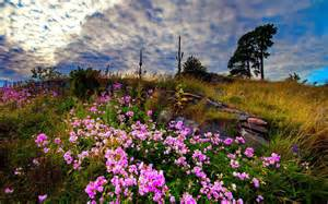 Landscape Definition Tagalog Wiesenblumen Hd Desktop Hintergrund Widescreen High