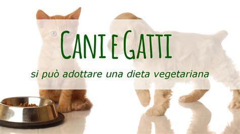 alimentazione vegetariana per cani dieta vegetariana per i cani