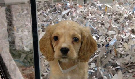 california   state  ban selling animals