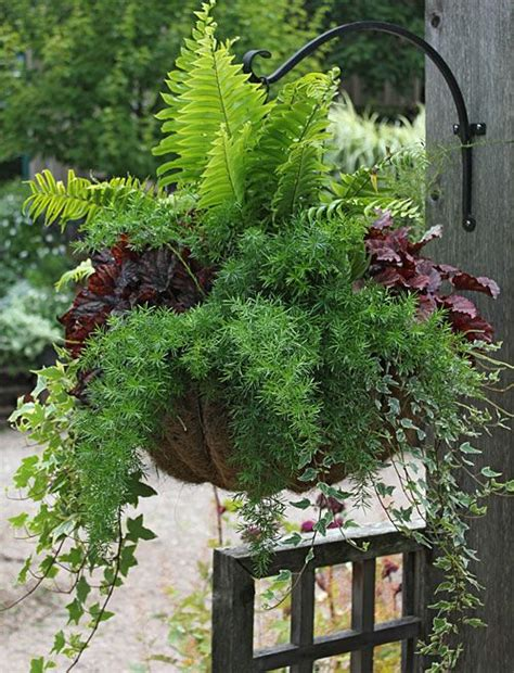 cascading indoor plants 204 best trailing cascading spiller plants for baskets or