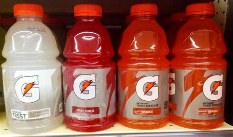 gatorade for dogs can dogs drink gatorade it s a doggie thing
