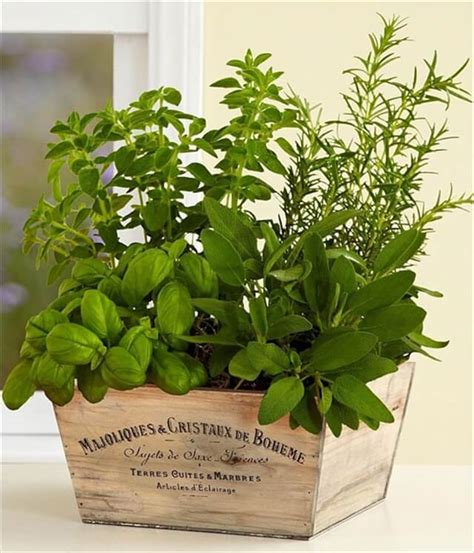 indoor herb gardens 14 diy indoor garden ideas diy to make