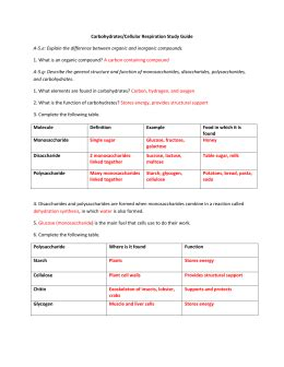 chapter 6 carbohydrates study guide answers studylib net essys homework help flashcards research