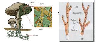Rautan Bentuk Jamur 2 Lubang jamur ciri bentuk ukuran cara hidup habitat dan reproduksi biologi