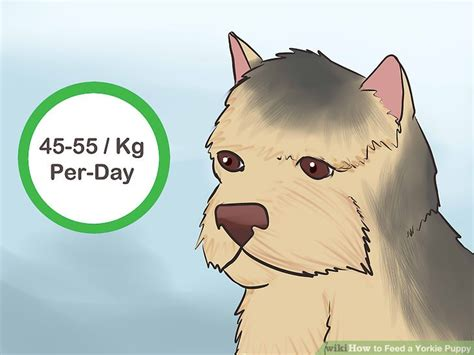 how much to feed a yorkie per day how to feed a yorkie puppy 11 steps with pictures wikihow