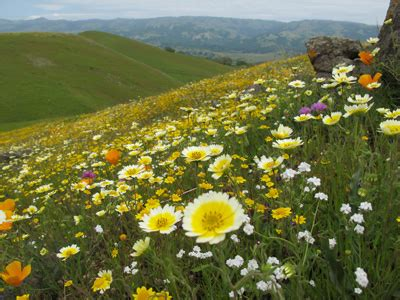 picture of the day: flower meadow in californian plant