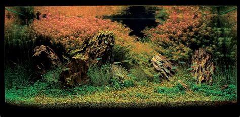 aquascape contest aquascape ideas