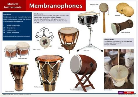 Membranophones   ThingLink