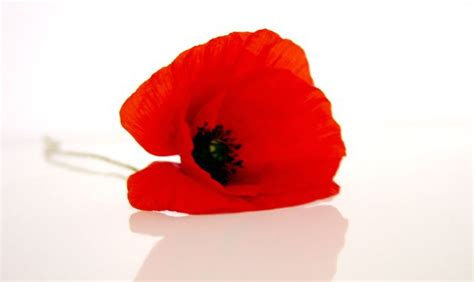 17 best images about poppy day on pinterest anzac day poppy fields and memorial day