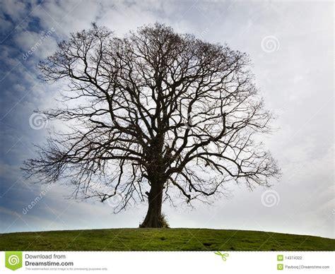 lonely bare tree stock photo image  english twig