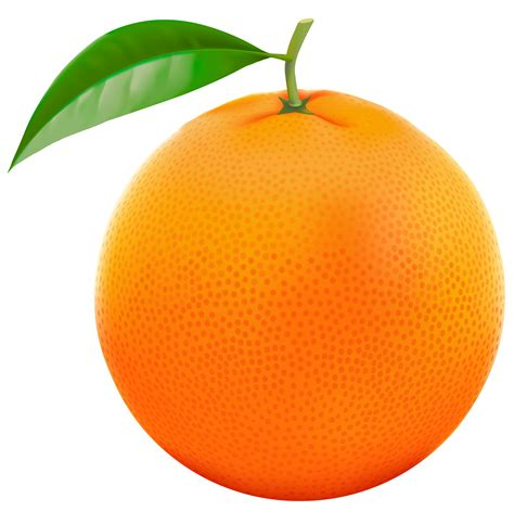 orange clipart orange clipart clipart best