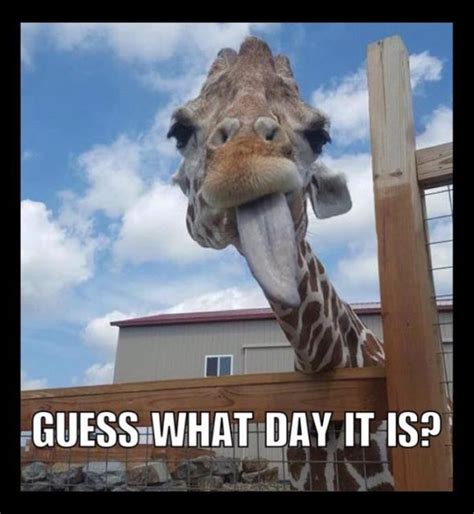 Giraffe Meme - april the giraffe internet reactions newsday