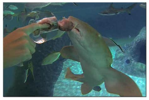florida keys aquarium encounters | coral reef encounter