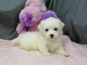 free puppies in hattiesburg ms dogs hattiesburg ms free classified ads