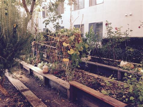 Redwood Gardens at berkeley senior home concern a beloved garden