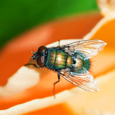 how to get rid of flies in the yard how to get rid of stuff