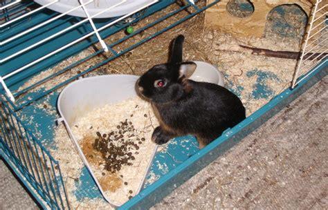 kaninchen in der wohnung halten kaninchenhaltung in der wohnung