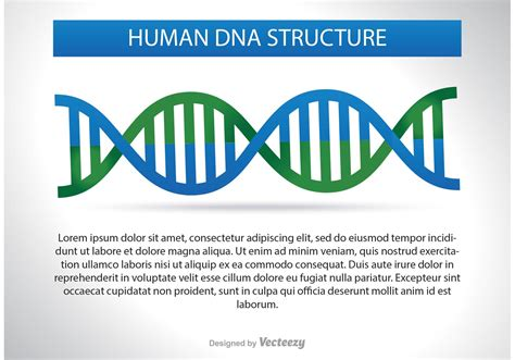 All Systems Go For Tuesday Dna Reveal by Dna Structure Illustration Free Vector