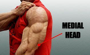 steinbrech medial head tricep from sean   male surgical