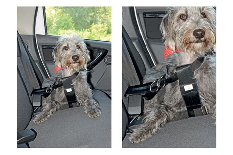 best car harness halfords medium car harness best in car guards and harnesses auto express