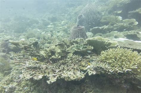 redang dive gipsy divers pulau redang all you need to before