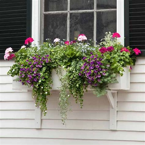 window boxes for plants plant a better window box garden gardens window and parrots