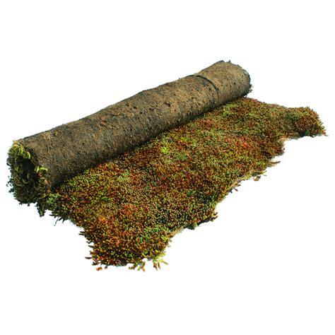 costo tappeto erboso al mq costo prato pronto al mq top prato pronto a rotoli di